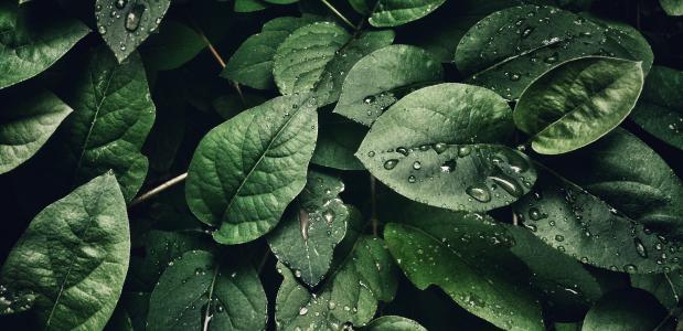 Yoga natuur meditatie muziek plants play biofeedback