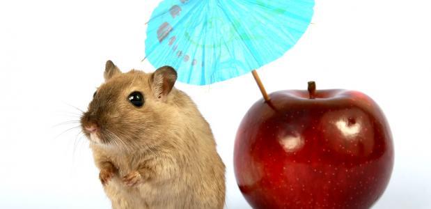 muis zonder stress