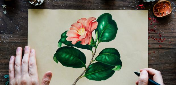zen tekenen bloem verven