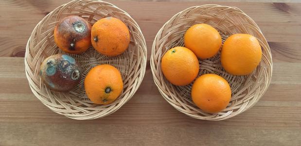 Fruit blijft langer vers! Foto Svitec